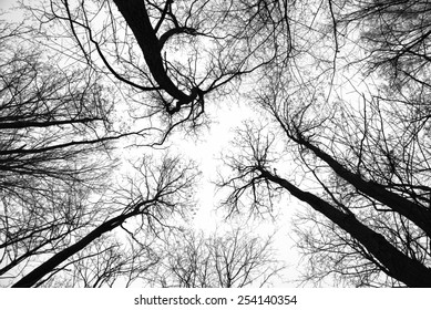 Abstract leafless tree trunks and branches with a pale eerie sky behind