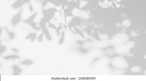 Abstract leaves shadow background. Natural leaves tree branch shadows and sunlight dappled on white concrete wall texture in garden for background and wallpaper 
