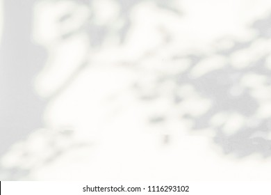 Abstract leaves shadow background, nature leaves, tree, trunk and branch falling on white concrete wall texture for background and wallpaper, black and white monochrome tone, nature art on wall