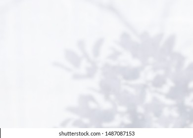 Abstract leaves shadow blurred background of natural leaves and tree branch falling on white wall for background and wallpaper,  nature shadow art on wall