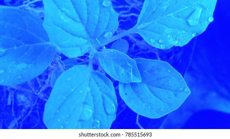 Abstract of the leaves with water drops on it with abstract background of Blue color. Abstract background of Blue and white color.