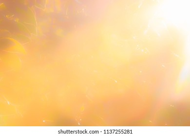 Abstract light bright background autumn theme. Soft colors of the blurry leaves in the sunlight during the sunset.
