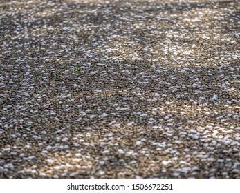Abstract light pink Sakura petals on brown gravel concrete or cement floor.