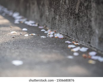 Abstract light pink Sakura petals on brown gravel concrete or cement pavement floor.
