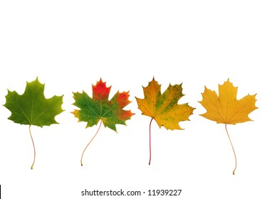 Abstract of a line of maple leaves with the colors progressing from green to the colors of Autumn. Set against a white background.