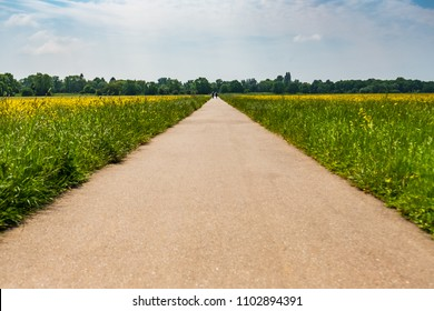 Abstract, low level view of a wide asphalt road and path seen extending to the distant whereby a couple can be seen walking into the distant forest. Fields of buttercups are also in view.