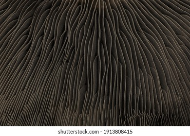 Abstract macro background of portobello mushroom bottom cap. Futuristic look of wavy line shape forms close-up surface