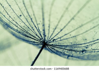 Abstract macro photo of dandelion seeds. Shallow focus. Old styl - Shutterstock ID 1169400688