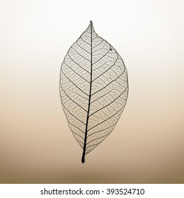 Abstract macro photo of plant's leaf. Minimalism.