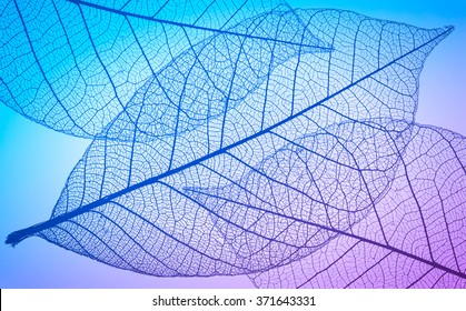 Abstract macro photo of plant's leaves