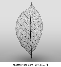 Abstract macro photo of plant's leaves. Black and white. Minimalism.