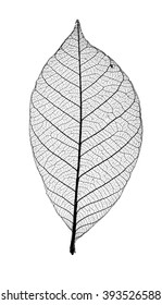 Abstract macro photo of plant's leaves isolated over white background