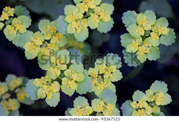 Abstract macro shot of flowers in blue and yellow.