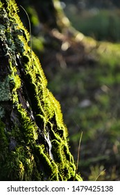 Abstract macro of soft green moss with sun light reflection on the trunk of the tree in the foreground, and a bokeh of the forest ground in the background.