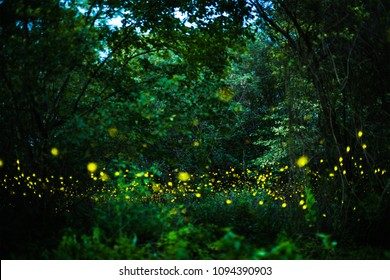 Abstract and magical image of Firefly flying in the night forest in Thailand