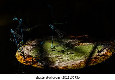 Abstract and magical image of Firefly flying in the night forest.