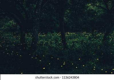 Abstrakt von vielen fieberhaften Fliegen im Wald. Nachts Fireflies im Busch in Bangkok (Prachinburi) Thailand. Firefly symbolisiert die Integrität des Ökosystems. Lange Belichtung Foto.