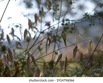 Abstract meadow with an uplifting airy sunny feel. Soft colours and gentle image. Beautiful smudge of colour in the hills in the background. Two stems of husks diagonally crossing in near silhouette.