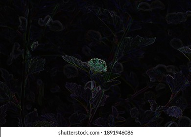 Abstract monochrome black photo of plant with neon edges