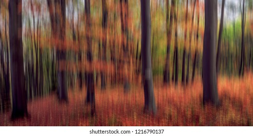 Abstract Motion Blur Fall Forest
