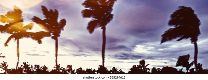 Abstract motion blurred palm leaves moving in hurricane. Climate catastrophe tropical thunderstorm palm trees on beach for weather concept news, nature template design, magazines. Image with filter