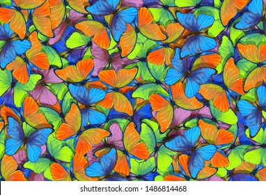Abstract multicolored natural background. Pattern of multicolored butterflies morpho, texture background.