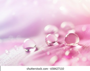 Abstract natural background with beautiful water drops on a pink and lilac petal peony close-up macro. Gentle soft elegant airy artistic image with soft focus .