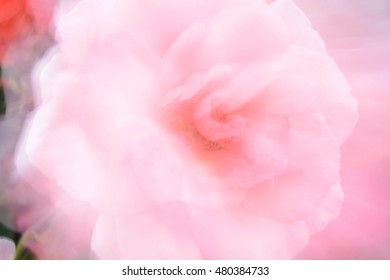 Abstract natural background blurred