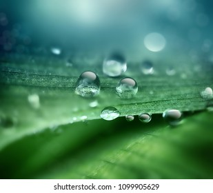abstract natural background with drops of dew on a close-up sheet