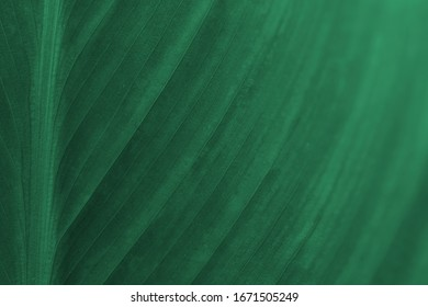 Abstract natural bio green texture. Macro pattern of lines on a leaf. Organic aqua green background. Soft focus.