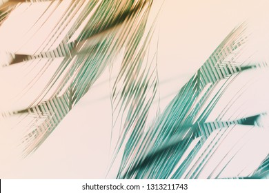 Abstract natural geometrical symmetry decor art background. Pattern from tropical plant palm leaves. High resolution. Toned pink turquoise colors. Banner boho style. Double exposure