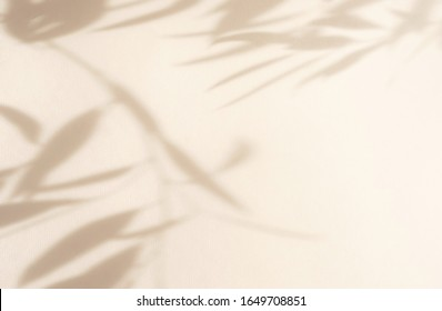 Abstract natural leaves shadows  background on beige color wall texture . copy space. floral card