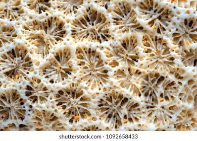 abstract natural texture of a sea coral closeup