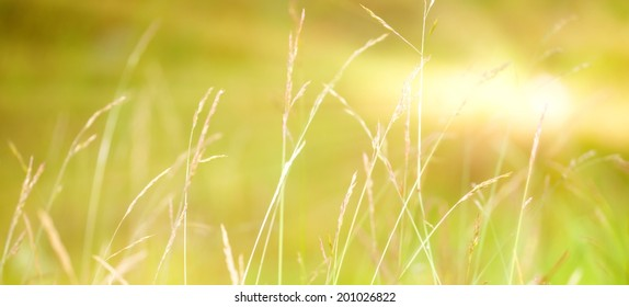 abstract nature background in the morning