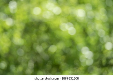 Abstract, nature bokeh background, green foliage of the forest. Green nature in blurry style for creative design.