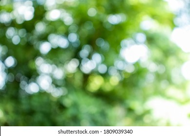Abstract nature with bokeh , green background from the leaves , suitable for the background