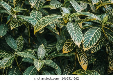 Abstract, nature Green leaf background and beautiful wallpaper.