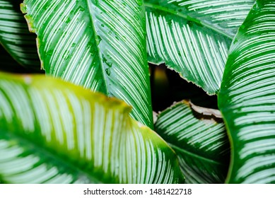 Abstract, nature Green leaf background and beautiful wallpaper.(high quality)