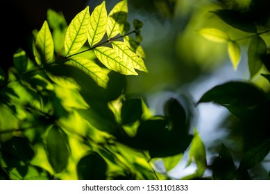 abstract nature green leaf ,green background.