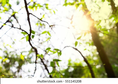 Abstract nature leave background with sunlight