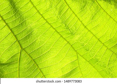 Abstract nature texture green leaves for background