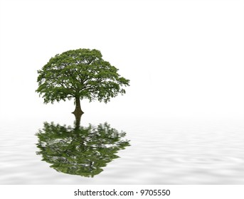 Abstract of an oak tree in leaf in summer with white and grey reflection in softly rippled water. Set against a white background.