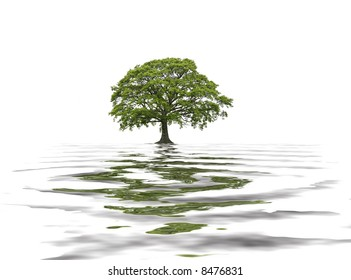 Abstract of an oak tree in summer with reflection in water. Set against a white background.