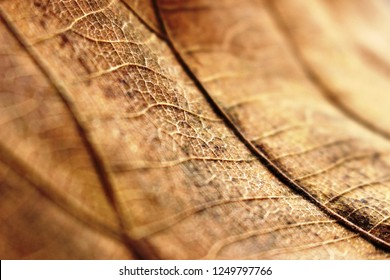 Abstract organic background: Selective focus shows a sliver of detail of the patterns on an  old brown Autumn leaf.