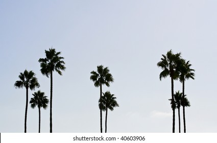 Abstract Palm Tree Shot