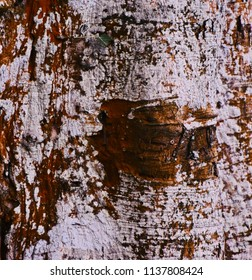 Abstract parts of a large tree isolated unique natural background photo
