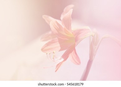 abstract pastel background of pink flower