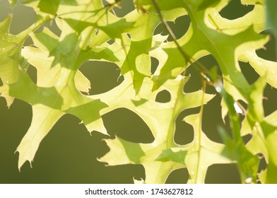 Abstract pattern of backlit tree leaves