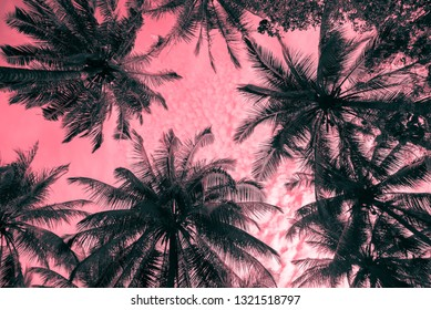 Abstract pattern coconut palm tree leaf background. Art nature pattern background or tropical summer beach holiday vacation traveling, save the earth concept.
