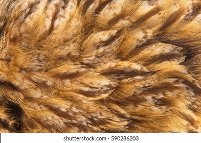 Abstract pattern of feathers owls close-up as background. The texture of the short feathers of the owl. Macro of the brown and yellow feathers of a owl.